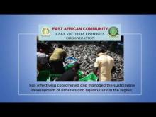 Embedded thumbnail for Lake Victoria Fisheries Organization (LVFO)